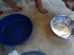 ドットわん鶏ごはんミックス犬完食