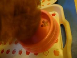トイプーも納豆を完食