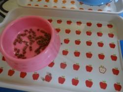 トイプードルの食べ残した食器