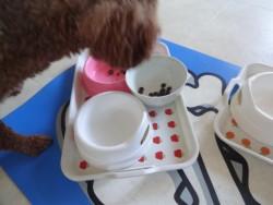 トイプードルも最後にモグワンフードを食べ始めた