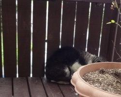 迷い猫が庭のデッキで行き倒れ