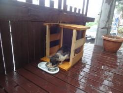 手作りハウスで猫ごはん