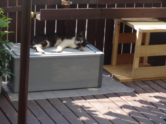 猫が寝ていてほっこりする